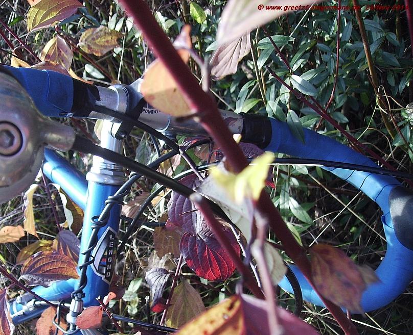 Stylish steel bike in splendid fall-colored environment