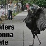 Turkey Pedestrian of Minneapolis (courtesy of http://blogs.citypages.com/blotter/northeast%20turkey%20haters.jpg)