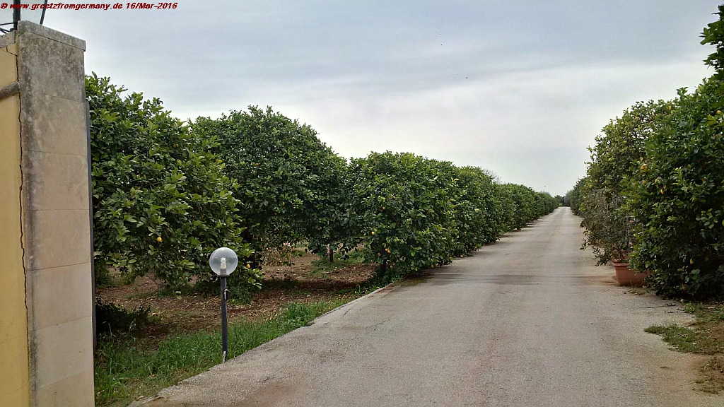 Gates welcomingly wide open to greet visitors of a Sicilian lemon farm - one of the many examples of Southern hospitality married to the art of living with and from Nature.