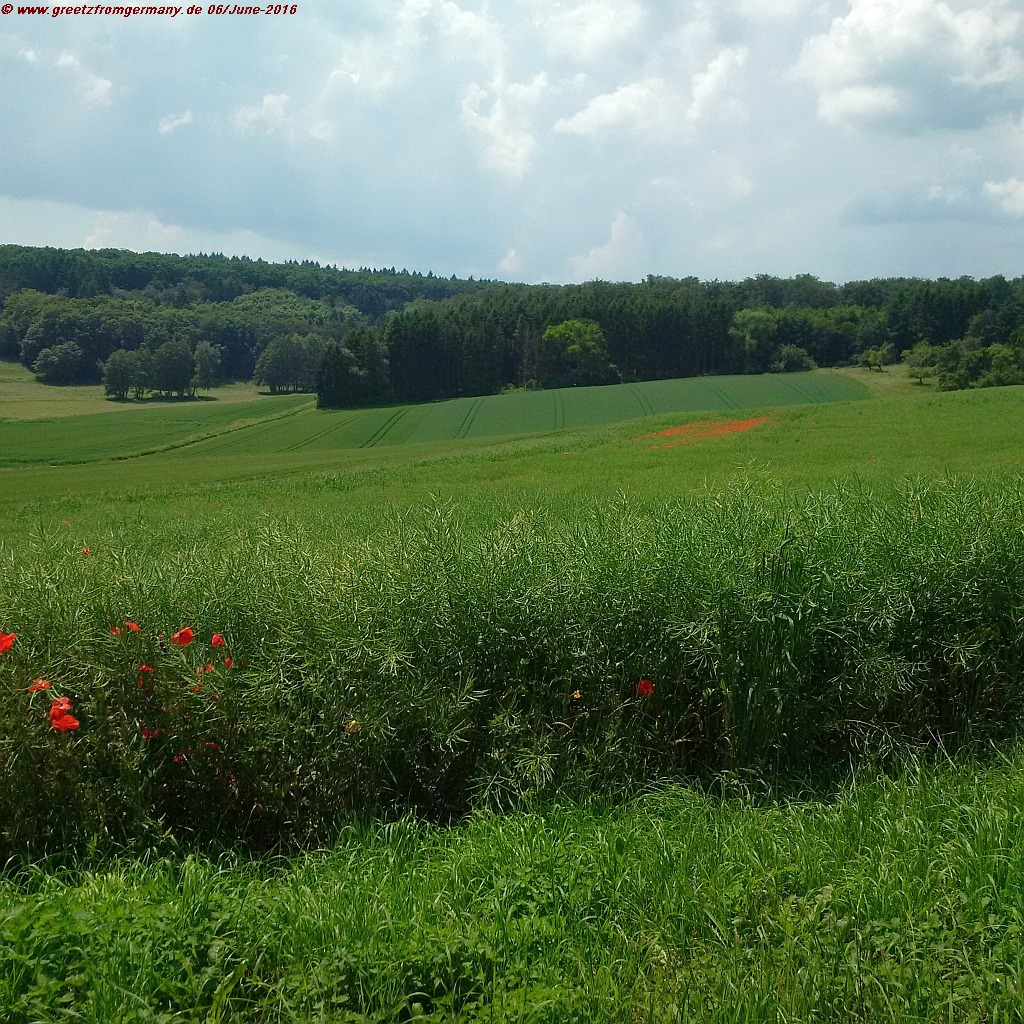 Peaceful poppy-sprinkled Taunus hills and meadows