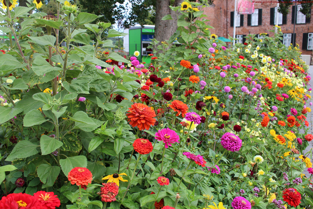 Bouquet flower beds greet the State Garden Show visitors with stunning colors and odors as sweet as they are subtle.